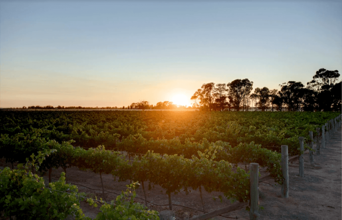 Final 2019 medals awarded to wines from Australia and New Zealand