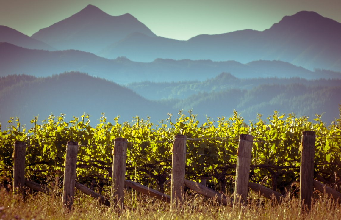 Value alternatives to red Burgundy and Rhône: Top 20 New Zealand red wines