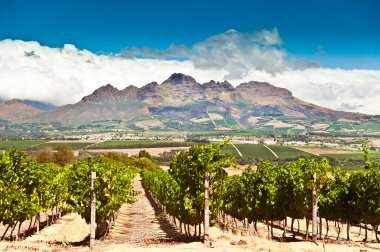 Wine trade rallies around South Africa in new campaign
