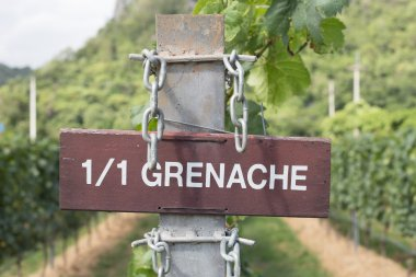Top white and rosé Grenache wines