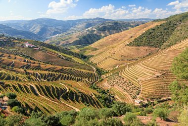 Top 15 Portuguese red wines